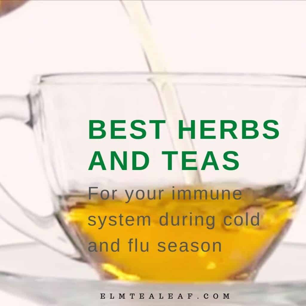 Glass cup of Herbal Tea for cold and flu season.