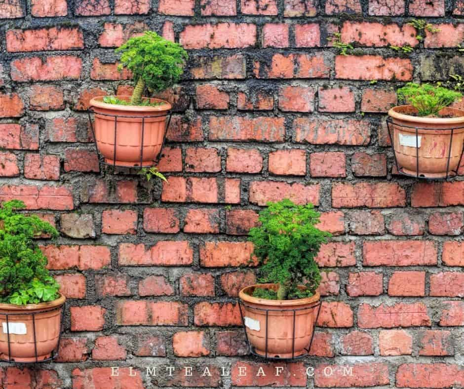 Wall with potted herbs